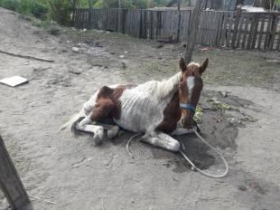 caballo1