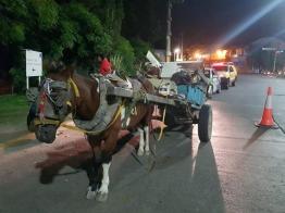 carros y caballos